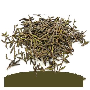 Aulne tardif mâle (poivre des dunes)