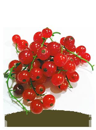 à grappes rouges