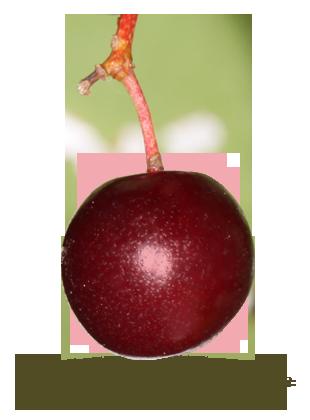 à grappe rouge