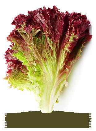 en feuilles rouge